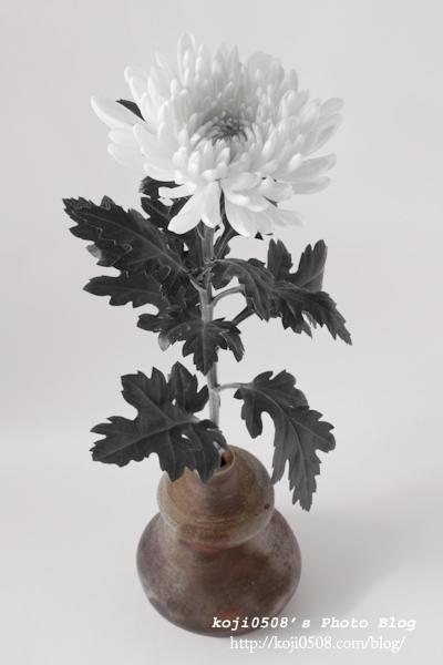Memento-mori 白菊と備前焼一輪挿し