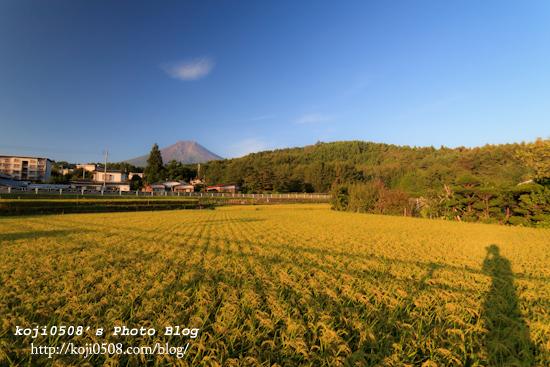 稲穂と富士山遠景