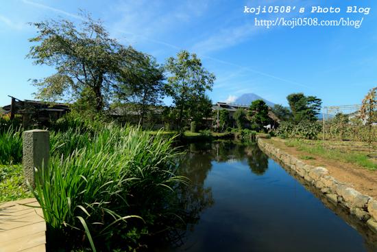 忍野八海の菖蒲池より望む富士山遠景